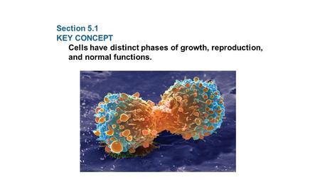 Section 5.1 KEY CONCEPT Cells have distinct phases of growth, reproduction, and normal functions.
