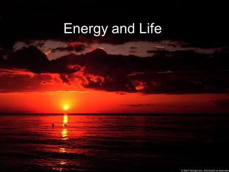 Energy and Life. Energy Pyramids: Autotrophs Characteristics: Use light energy from sun to produce food (convert sunlight energy to chemical energy)