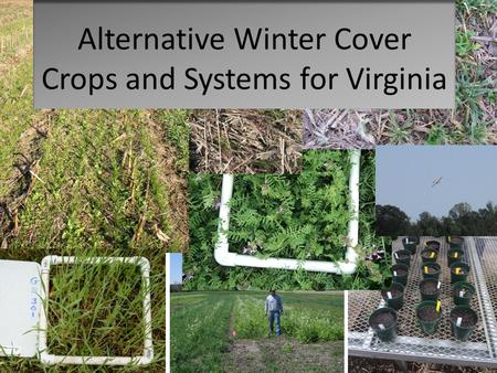 Alternative Winter Cover Crops and Systems for Virginia.