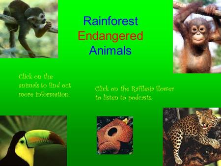 Rainforest Endangered Animals Click on the animals to find out more information. Click on the Rafflesia flower to listen to podcasts.