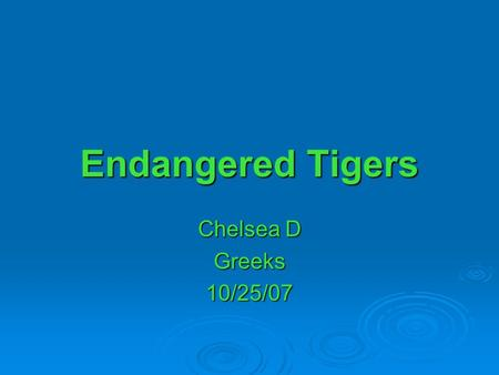 Endangered Tigers Chelsea D Greeks10/25/07. Tiger Facts  The tiger is the largest member of the cat family  Their Scientific name is the Panthera Tigris.