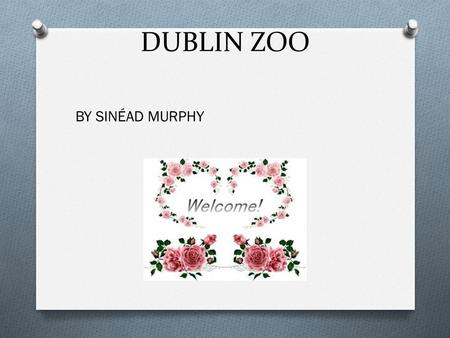DUBLIN ZOO BY SINÉAD MURPHY. ENDANGERED O Most species of animals are in danger O Animals are under threat O People hunt them for there skin O Help the.