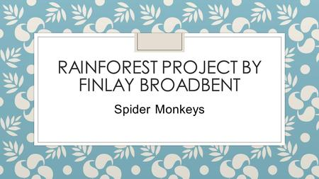 RAINFOREST PROJECT BY FINLAY BROADBENT Spider Monkeys.