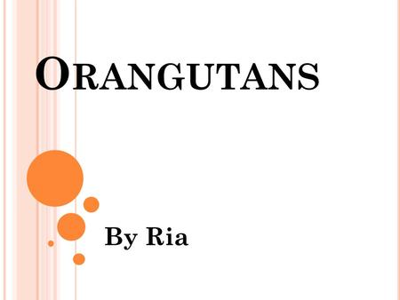 O RANGUTANS By Ria. D IFFERENT S PECIES There are two different species of orangutans. The first species is the Bornean orangutan. It lives on the island.