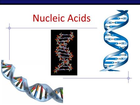 AP Biology Nucleic Acids 2006-2007 Nucleic Acids Function: – store & transmit hereditary information polymers = – RNA (ribonucleic acid) – DNA (deoxyribonucleic.