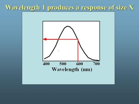 Wavelength 1 produces a response of size X. Wavelength 2 produces a response of size X.