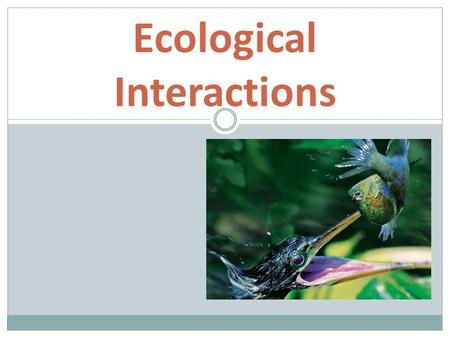 Ecological Interactions. ENGAGEMENT  As you watch the youtube video, describe how the Rhino and Bird interact.