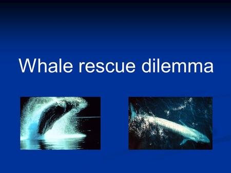 Whale rescue dilemma. Cetaceans Descendants of land-living mammals Related to hoofed animals Entered the water roughly 50 million years ago.