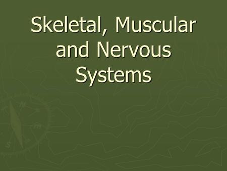 Medical Dictionary - Muscular