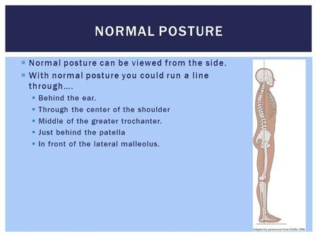  Normal posture can be viewed from the side.  With normal posture you could run a line through….  Behind the ear.  Through the center of the shoulder.