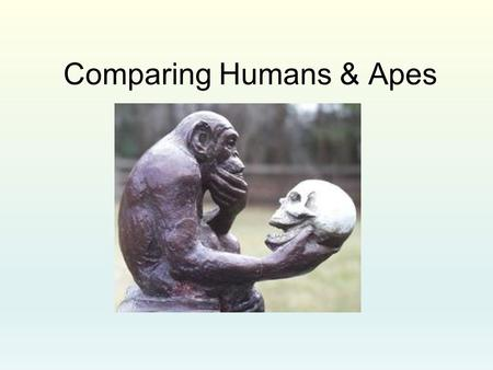 Comparing Humans & Apes. Why Bipedalism? Chimpanzees & bipedalism Chimpanzees use a variety of postures. Their main mode of slow locomotion on the ground.
