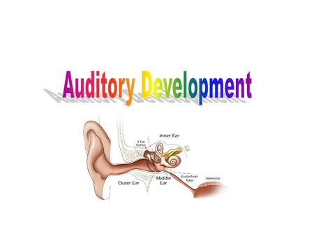 Prenatal stimulation The human fetus possesses rudimentary hearing from 20 weeks of gestation. This hearing will develop and mature during the remainder.
