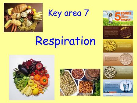 Key area 7 Respiration. Energy In Our Food Learning Intention: To know the importance of food. Success Criteria: Be able to state the type of energy stored.