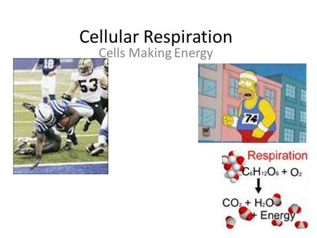 Cellular Respiration Cells Making Energy.