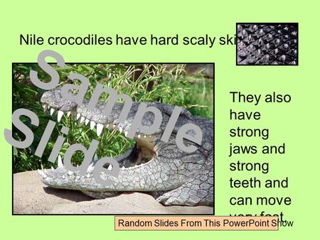 Nile crocodiles have hard scaly skin. They also have strong jaws and strong teeth and can move very fast. Sample Slide Random Slides From This PowerPoint.