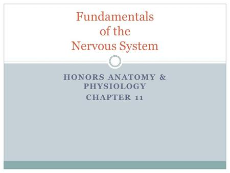 HONORS ANATOMY & PHYSIOLOGY CHAPTER 11 Fundamentals of the Nervous System.