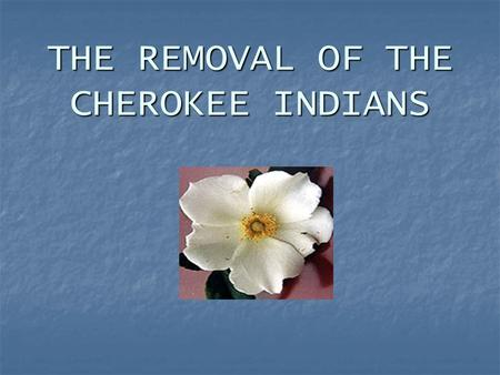THE REMOVAL OF THE CHEROKEE INDIANS. The Legend of the Cherokee Rose No better symbol exists of the pain and suffering of the Trail Where They Cried