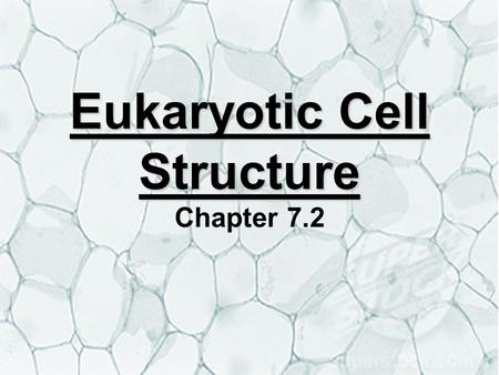 Eukaryotic Cell Structure Eukaryotic Cell Structure Chapter 7.2.