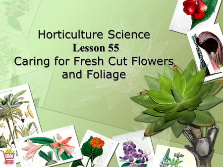 Horticulture Science Lesson 55 Caring for Fresh Cut Flowers and Foliage.