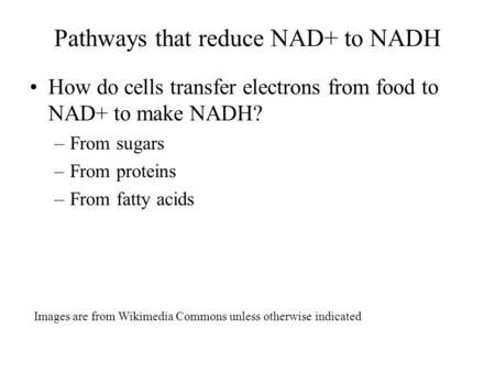 Pathways that reduce NAD+ to NADH How do cells transfer electrons from food to NAD+ to make NADH? –From sugars –From proteins –From fatty acids Images.