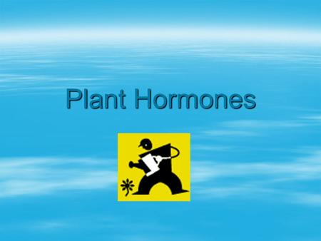 Plant Hormones. Types of hormones  Like animals, plants use hormones to produce functional and structural changes.  Types of hormones include  Auxins.