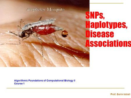 SNPs, Haplotypes, Disease Associations Algorithmic Foundations of Computational Biology II Course 1 Prof. Sorin Istrail.