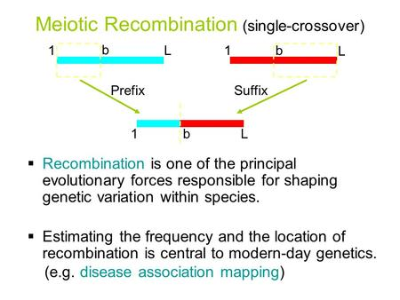 Meiotic Recombination (single-crossover) PrefixSuffix  Recombination is one of the principal evolutionary forces responsible for shaping genetic variation.