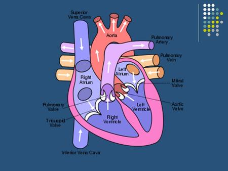 HEART PHYSIOLOGY (HOW THE HEART WORKS) HEART SOUNDS.