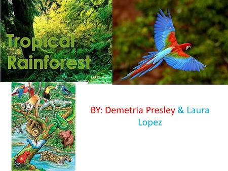 BY: Demetria Presley & Laura Lopez. GENERAL INFORMATION tropical rainforest is a biome type that occurs roughly within the latitudes 28 degrees north.