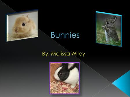  Rabbits are small mammals that can be pets or wild animals.  Wild bunnies dig holes to keep them warm and safe from bigger animals.  Bunnies as pet.