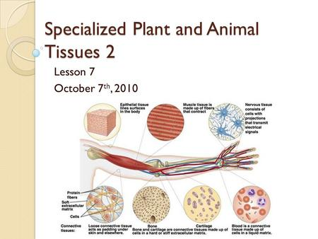 the animal cells structure and their specific functions All living things are made up of cells the structures of different types of cells are related to their functions animal cells and plant cells have features in common, such as a nucleus, cytoplasm, cell membrane, mitochondria and ribosomes.