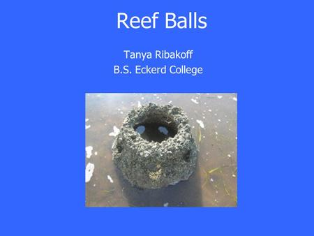 Tanya Ribakoff B.S. Eckerd College Reef Balls. Half circle shaped concrete balls with different size holes throughout Set on seafloor Submerged at high.