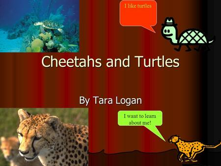 Cheetahs and Turtles By Tara Logan I like turtles I want to learn about me!