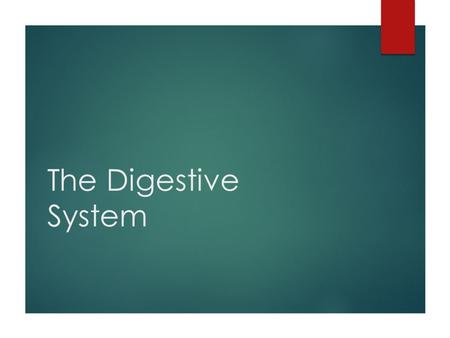 The Digestive System. Basic Information  Converts feed into a form that can be used by the body for maintenance, growth and reproduction  Mature light.