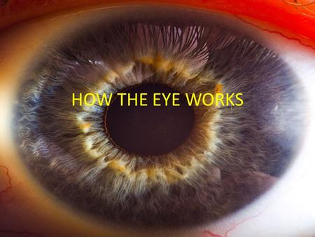 HOW THE EYE WORKS. A cross section of the human eye The image cast on the retina is upside down, then turned right side up by the brain.