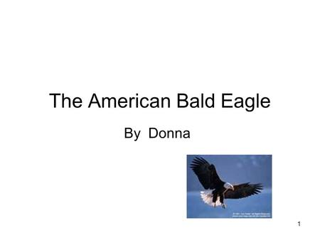 1 The American Bald Eagle By Donna. 2 TABLE OF CONTENTS MEET THE American Bald Eagle.….3 HOME SWEET HOME ….. 4 DINNER TIME……………..5 ANIMAL ADAPTATIONS…6.