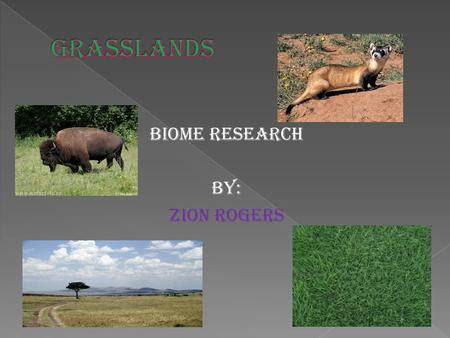 Biome Research By: Zion Rogers.  Location: Grasslands are located in every continent except for Antarctica.  Description: Large rolling terrains of.