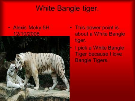 White Bangle tiger. Alexis Moky 5H 12/10/2008 This power point is about a White Bangle tiger. I pick a White Bangle Tiger because I love Bangle Tigers.