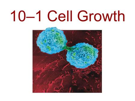 10–1 Cell Growth. Limits to Cell Growth The _______ a cell becomes, the _____ demands the cell places on its ____. In addition, the cell has more trouble.
