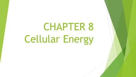 CHAPTER 8 Cellular Energy 8-2 Photosynthesis thylakoid granum stroma pigment NADP + Calvin cycle Cellular Energy Vocabulary Section 2.