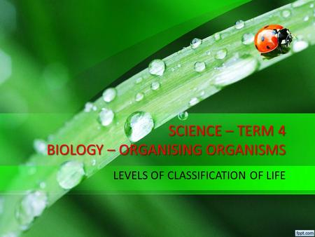 SCIENCE – TERM 4 BIOLOGY – ORGANISING ORGANISMS LEVELS OF CLASSIFICATION OF LIFE.