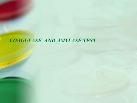 COAGULASE AND AMYLASE TEST
