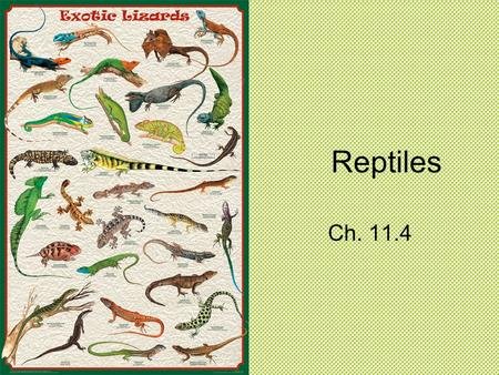 Reptiles Ch. 11.4. Adaptations for Life on Land Reptiles lay their eggs on land rather than in water. A reptile is an ectothermic vertebrate that has.