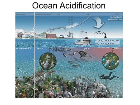 Ocean Acidification. Simplified Carbon Cycle Keeling Curve.