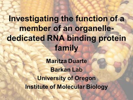Investigating the function of a member of an organelle- dedicated RNA binding protein family Maritza Duarte Barkan Lab University of Oregon Institute of.