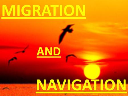 "NAVIGATION MIGRATION AND. MIGRATION ""In its purest sense, migration refers to seasonal movements between a location where an individual or population."