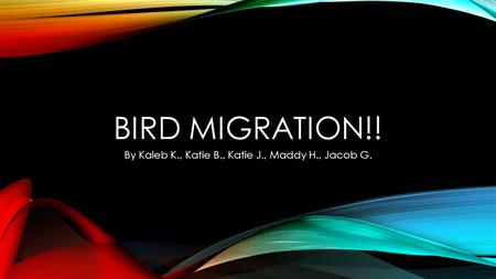 BIRD MIGRATION!! By Kaleb K., Katie B., Katie J., Maddy H., Jacob G.