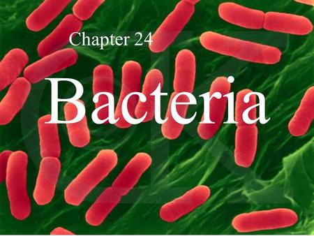 Bacteria Chapter 24. Two Kingdoms of Prokaryotes.