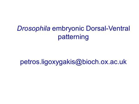 Drosophila embryonic Dorsal-Ventral patterning