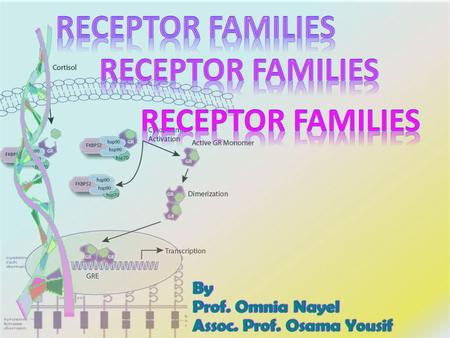 By Prof. Omnia Nayel Assoc. Prof. Osama Yousif. By the end of this lecture you will be able to :  Classify receptors into their main superfamilies 